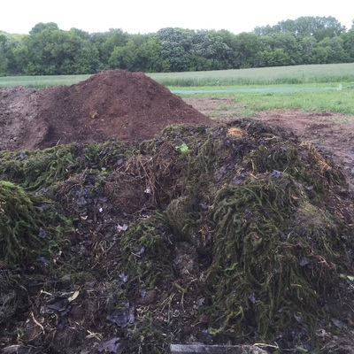 Lakeweed and leaves bring added nitrogen and carbon to the compost